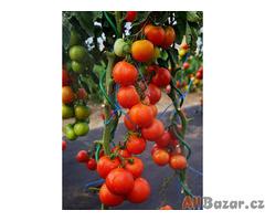 Rajče Orkádo - semena
