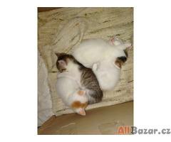 Prodám 4 koťata
