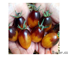 Rajče Indigo Kumquat
